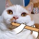 snowの猫認識がすごい!の記事より