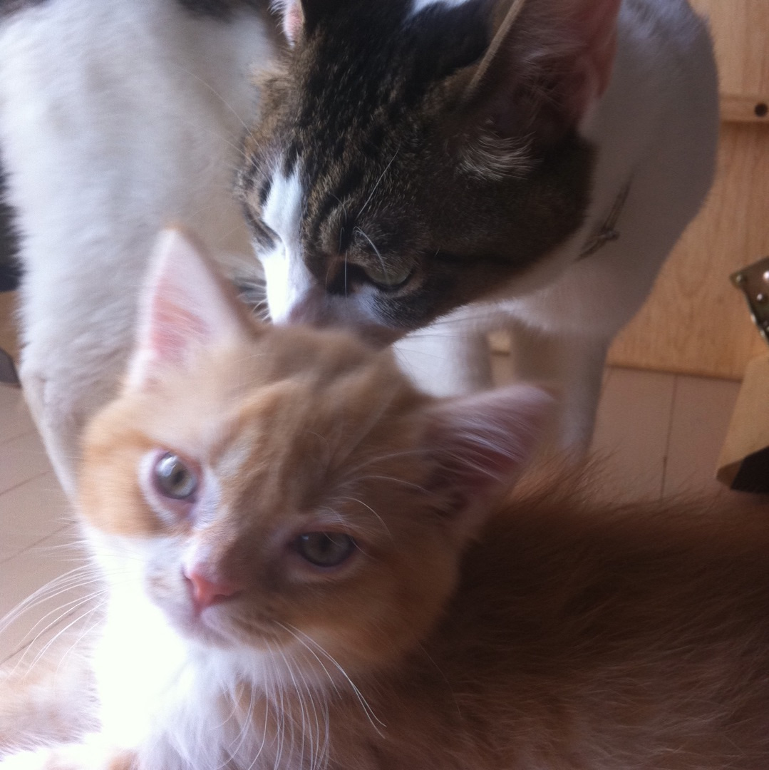 小説「人生を変えた猫」第6話の記事より
