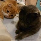 小説「人生を変えた猫」第7話の記事より
