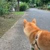 朝の散歩の画像