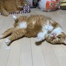 小説「人生を変えた猫」第8話の記事より