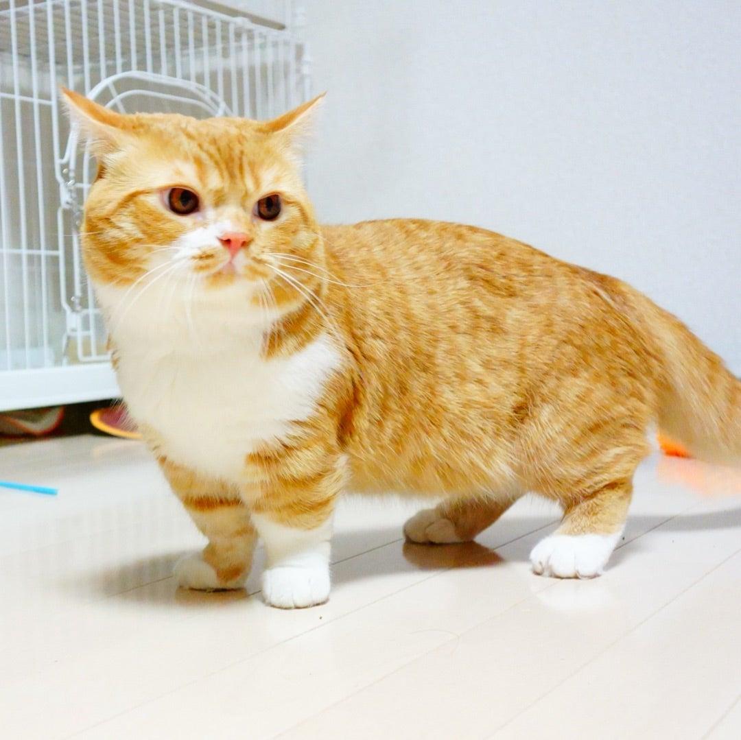 小説「人生を変えた猫」第9話の記事より