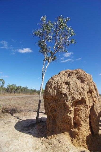 小さな蟻が巨大な塚をつくる