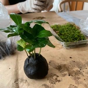 【参加者募集】9月の植物時間の画像