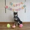 HAPPY BIRTHDAY!の画像