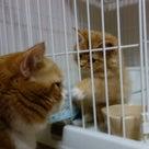 小説「人生を変えた猫」第10話の記事より