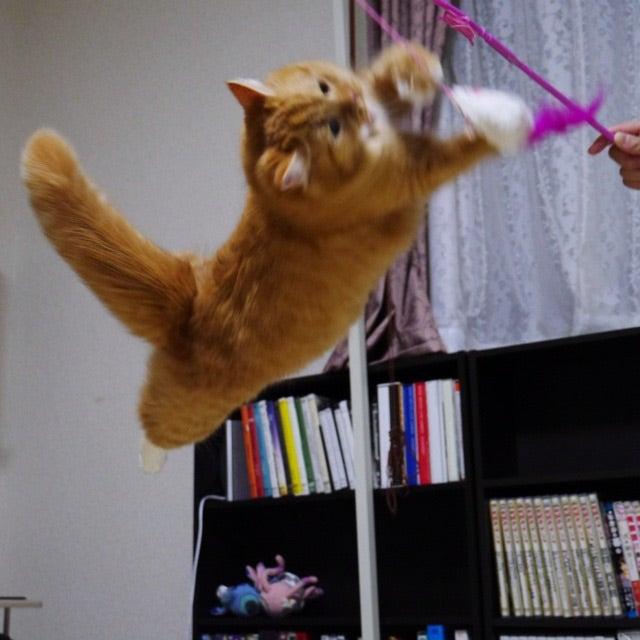 小説「人生を変えた猫」第11話の記事より