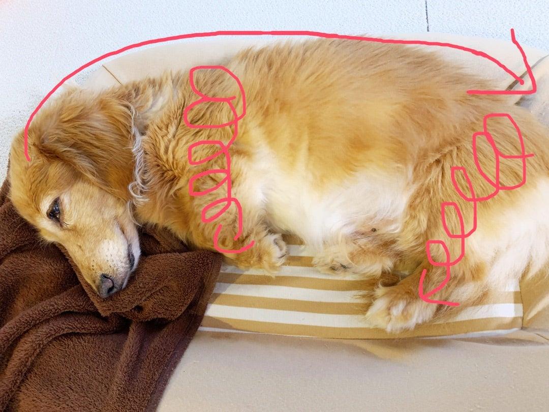 私の犬が喉の痛みを持っている場合の対処法
