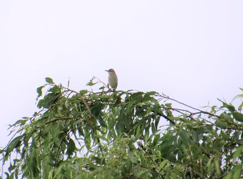 雨上がりの小鳥たち | 「みの」のつぶやき