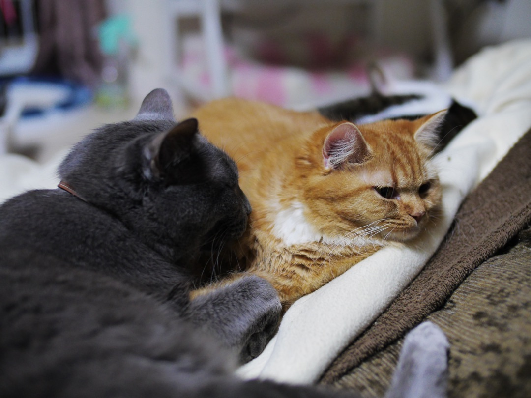 小説「人生を変えた猫」第12話の記事より