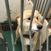 朝日新聞より 茨城県、「譲渡不適」の犬猫を殺処分数から除外 判断指針を作成