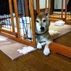 きよしイチオシ!(きよし)