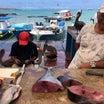 ガラパゴス諸島最後の夜☆☆サンタクルス島の魚市場で買ったマグロでマグロステーキと白ワイン♡♡♡