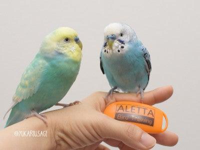 Ikura and Tara with a clicker