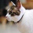 小説「人生を変えた猫」第13話の記事より
