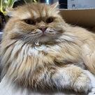 朝から猫のオシッコ攻撃!の記事より