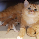 小説「人生を変えた猫」第14話の記事より
