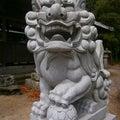 シリーズ♪狛犬♪ 7 岐部神社狛犬