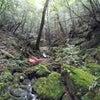 白谷雲水峡(その1)~屋久島ライトワークの旅日記~の画像