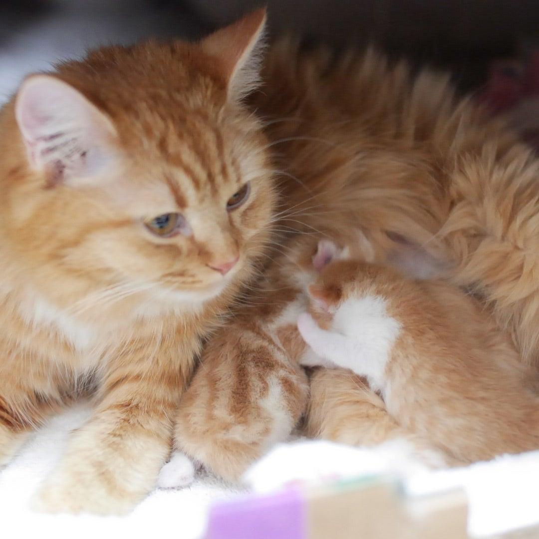 小説「人生を変えた猫」第15話の記事より