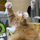 猫の心霊写真?の記事より