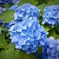 日記(911):紫陽花の中を覗いたら、とてもファンタスティック!