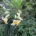 弘願寺 花の寺巡り 阿弥陀如来様です あじさいも咲いています