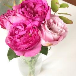 画像 【バラの生命力を取り込もう♡】香りでできるエネルギーマネジメント♡ の記事より 5つ目