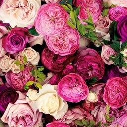 画像 【バラの生命力を取り込もう♡】香りでできるエネルギーマネジメント♡ の記事より 4つ目