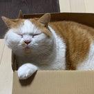 【サマーセール】マンチカンズしょっぷ!の記事より
