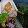 菜っ葉系収穫