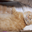 小説「人生を変えた猫」第16話の記事より