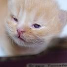 小説「人生を変えた猫」第17話の記事より