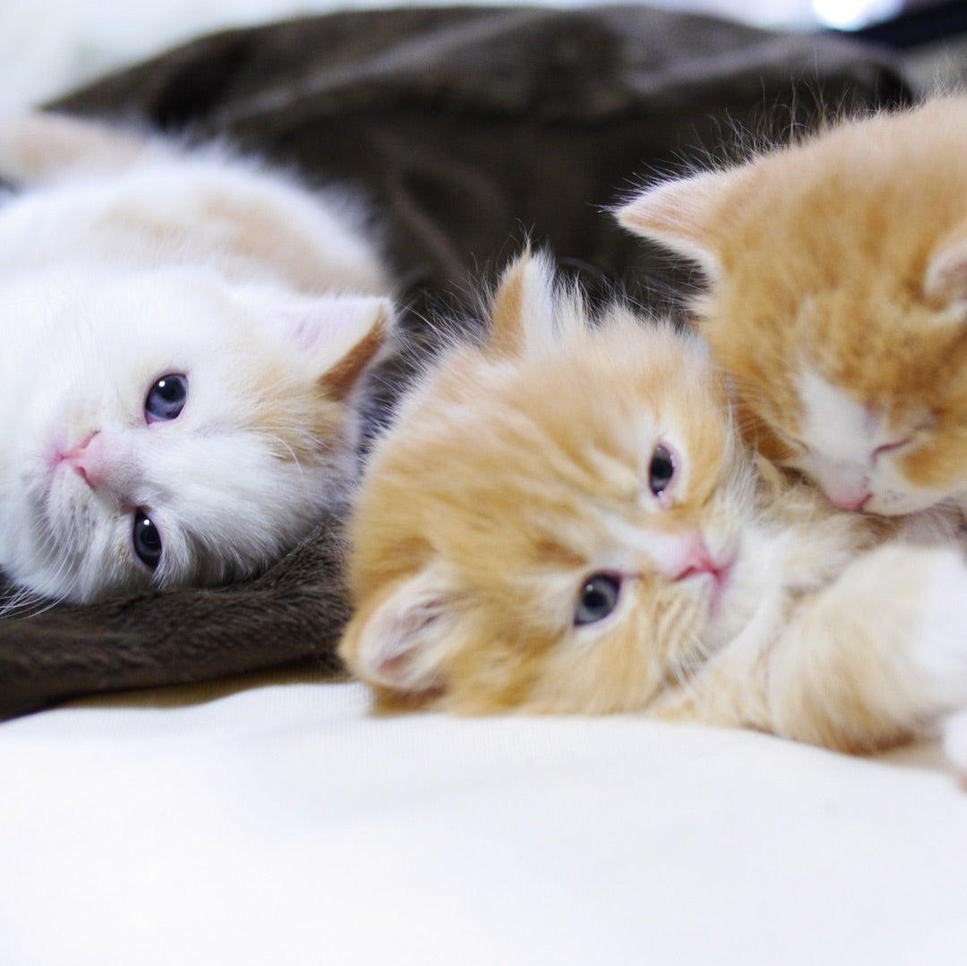 小説「人生を変えた猫」第18話の記事より