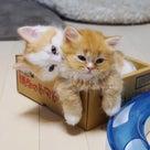 小説「人生を変えた猫」第19話の記事より