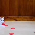 小説「人生を変えた猫」第20話の記事より