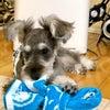 スヌーピーのタオル・・三男くんに貰いました・YUZU…このタオルが気に入ったよう...の画像