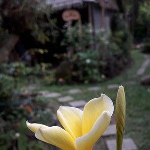 バリ島の休日ガルンガン。静かな森のお寺への画像