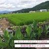 カンナ新潟遠征7/16の画像