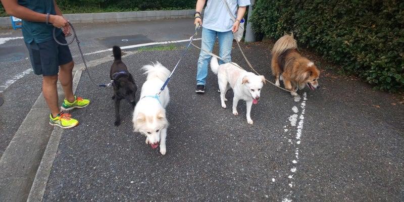の 犬 サンドウィッチ 散歩 マン