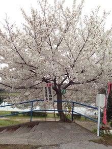 『桜』ミュージックビデオができました!「散りゆく花びらに 己を重ね 涙流すのなら」の記事より