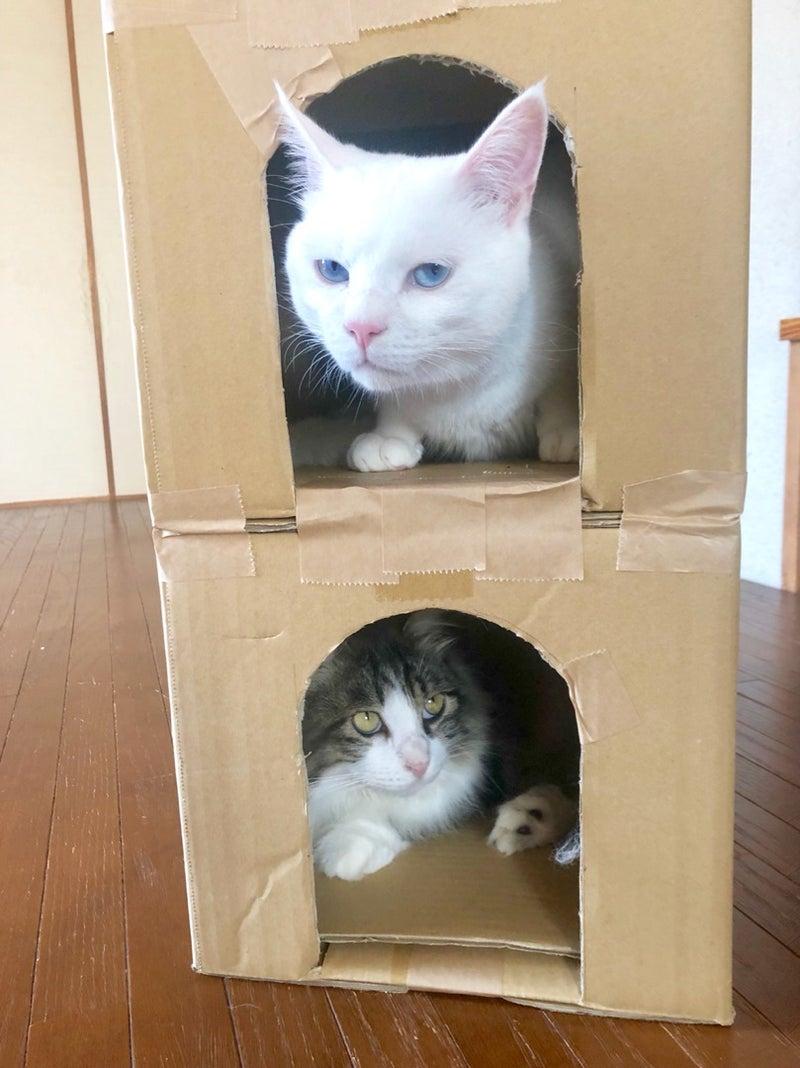 にゃん たま ハウス 【私が主役】にゃんたまhouse【猫はアクセサリー】Part3