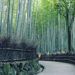 嵯峨野竹林の小路