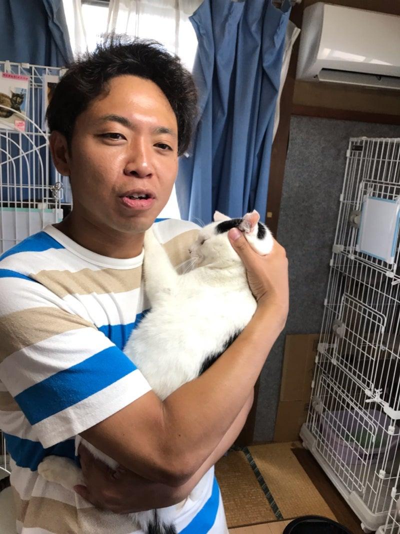 サンシャイン 池崎 猫 スマイル 「ただいま人馴れ訓練中のス...」千葉県 -