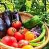 ただ、野菜を食べればいいわけではない!の画像