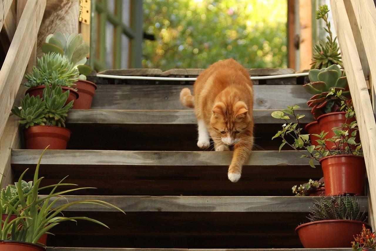 """""""その階段安全ですか?"""""""
