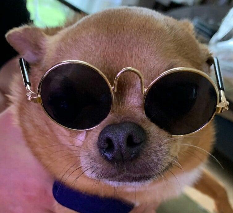 愛犬チョロ