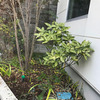 前庭デザイン&施工例(11月)の画像