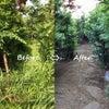 草刈り例(7月)の画像