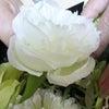 bloomish  Instructor Course ビックフレームの画像